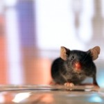 Scientists switch mouse's genes off and on with radio waves